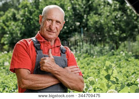 Portrait of an adult farmer, smiling and looking at the camera. A cheerful old man with gray hair wearing an outdoor apron with a copy of the space. stock photo