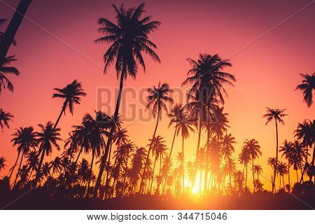 Summer vacation and nature travel adventure concept. Tropical palm tree on sunset sky and clouds abstract background. Vintage tone filter effect color style. stock photo