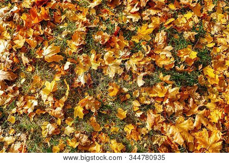 A low angle view of colorful autumn leaves on trees in a forest. stock photo