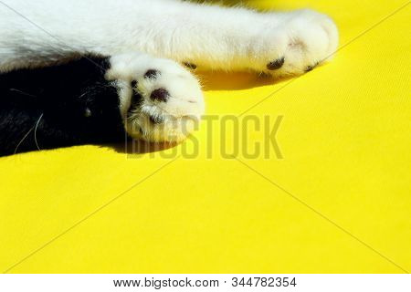 Two Cat`s Paws on Yellow Background. Cat`s Paw over colorful background. Pets, animals concept. stock photo