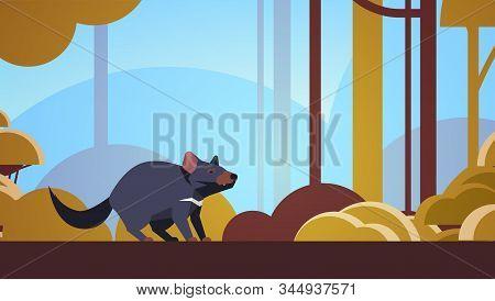 tasmanian devil walking in forest australian wild animal wildlife fauna concept landscape background horizontal vector illustration stock photo