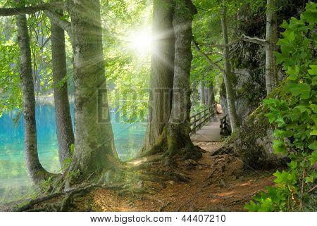 Paysage de forêt avec une eau turquoise et le soleil