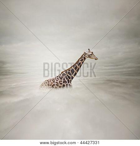 Girafe dans le ciel