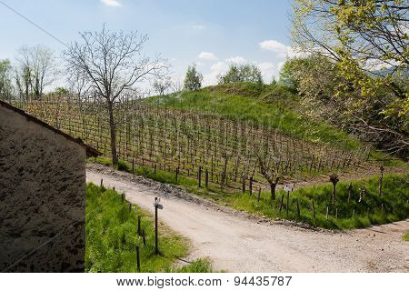 Agricolture rows of wine Marostica hills Italy stock photo