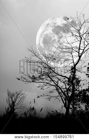 Silhouettes Of Dry Tree Against Night Sky And Bright Moon. Black And White Style.-Lg Fridge Magnet Skin (size 36x65)