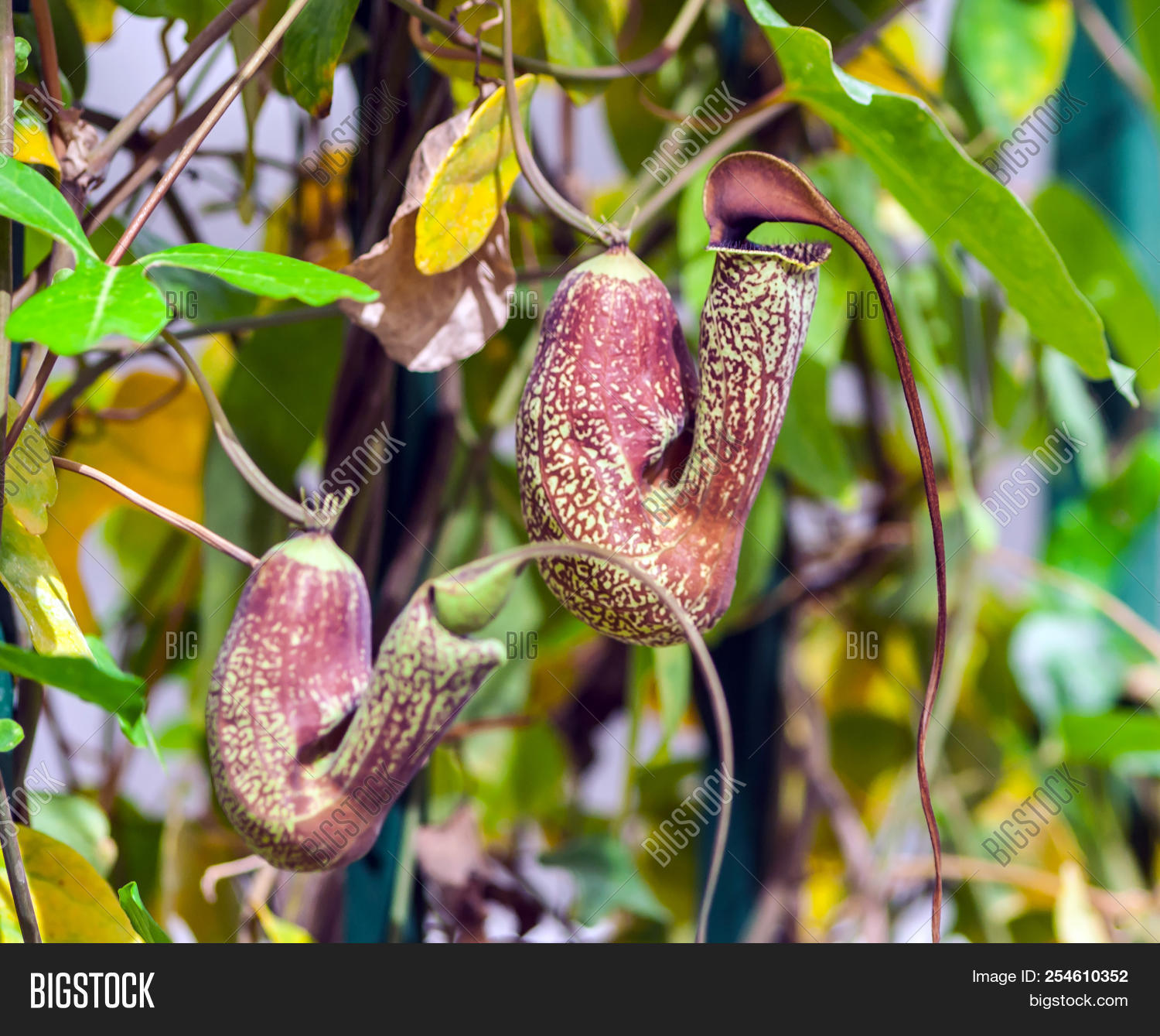 autumn,background,beautiful,bloom,blossom,blossoming,branch,bright,brownish,closeup,color,colorful,flora,flower,foliage,forest,garden,green,grounds,healthy,leaf,light,natural,nature,nobody,orange,outdoor,plant,predatory,rapacious,ravenous,red,season,sheet,speck,spot,summer,summertime,two,verdant,vivid,yard,yellow