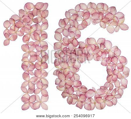 Arabic numeral 16, sixteen, from flowers of hydrangea, isolated on white background stock photo