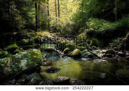 Rainforest River Nature Landscape. Stream In Rainforest Nature. Rainforest Stream. Nature. Stream. N