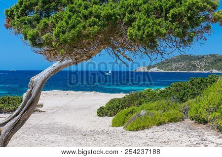 seascape with a tree and a sailboat in the background (Ibiza, Spain) stock photo