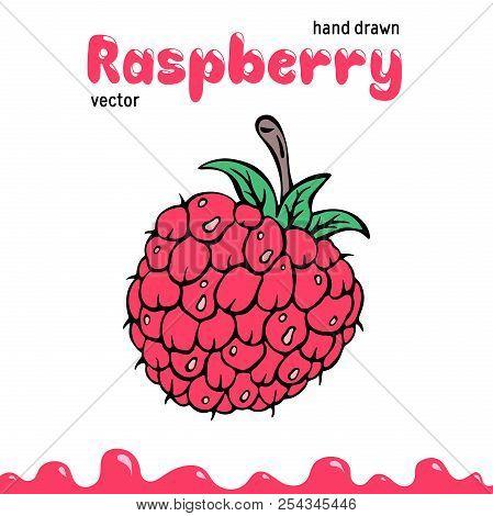 Raspberry vector illustration, berry clipart. Cartoon raspberry vector illustration for logo, design. Colored raspberry vector illustration for menu, package. Doodle berry clipart, raspberry isolated stock photo