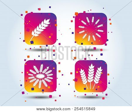 Agricultural icons. Gluten free or No gluten signs. Wreath of Wheat corn symbol. Colour gradient square buttons. Flat design concept. Vector stock photo