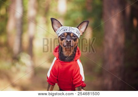 Fitness Dog . Dog In Sports Clothes On A Natural Summer, Autumn Background. Theme Of Sports And Anim