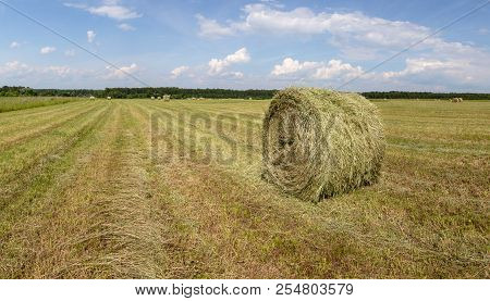 Harvested, mowed grass. The cut grass is pressed into rolls. Rolled-up hay. Harvesting hay for livestock. stock photo