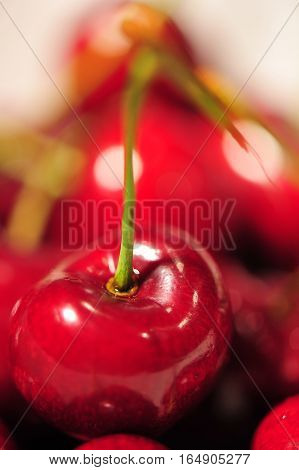 Red Cherries-Dishwasher Magnet Skin (size 24x24)
