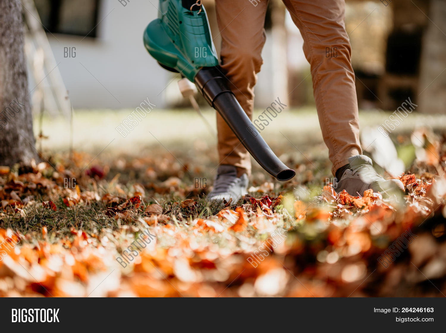 activity,agriculture,autumn,autumnal,back,blower,blowing,cleaner,cleaning,colourful,dust,duty,equipment,fall,flora,foliage,garden,gardener,gardening,happy,heavy,home,horticulture,industrial,industry,labor,landscaping,lawn,leaf,leaves,machine,man,mower,nature,outdoor,outside,patio,people,plants,professional,season,smiling,technology,tool,vacuum,work,worker,working,yard