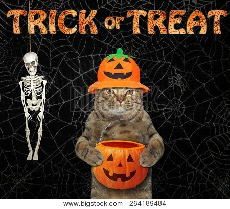 The cat in a hat holds an empty pumpkin basket. Trick or treat. Spider web background stock photo