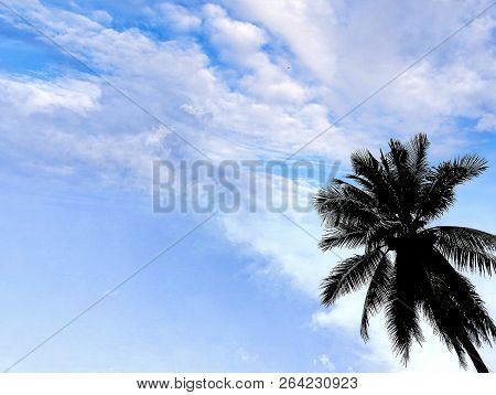 Coconut trees stand up to the bright sky. stock photo