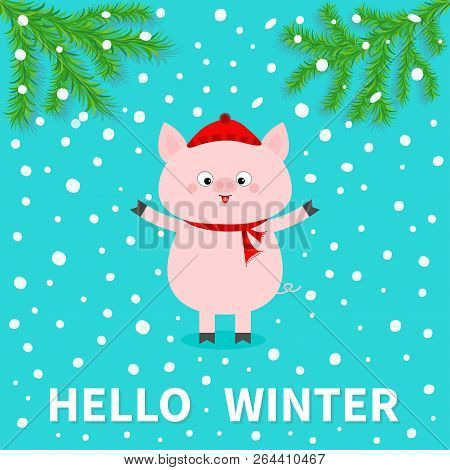 Hellow winter. Pink pig. Falling snow. Chinise symbol of 2019 new year. Fir tree. Branch spruce Cute cartoon funny character. Flat design. Blue background. Vector illustration stock photo