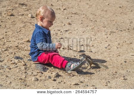 Baby on the ground playing next to a little squirrel in Fuerteventura. stock photo
