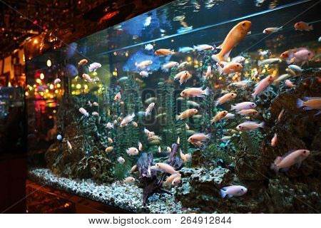Large aquarium with colorful fish and lighting in the interior stock photo