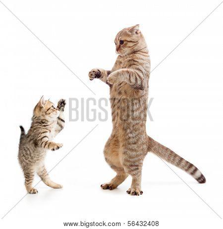 Chat et chaton debout drôle