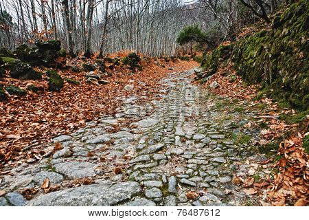 Old chesnut forest at winter beside the ancient roman road to Santa Clara San Martin de Trevejo Caceres Spain stock photo