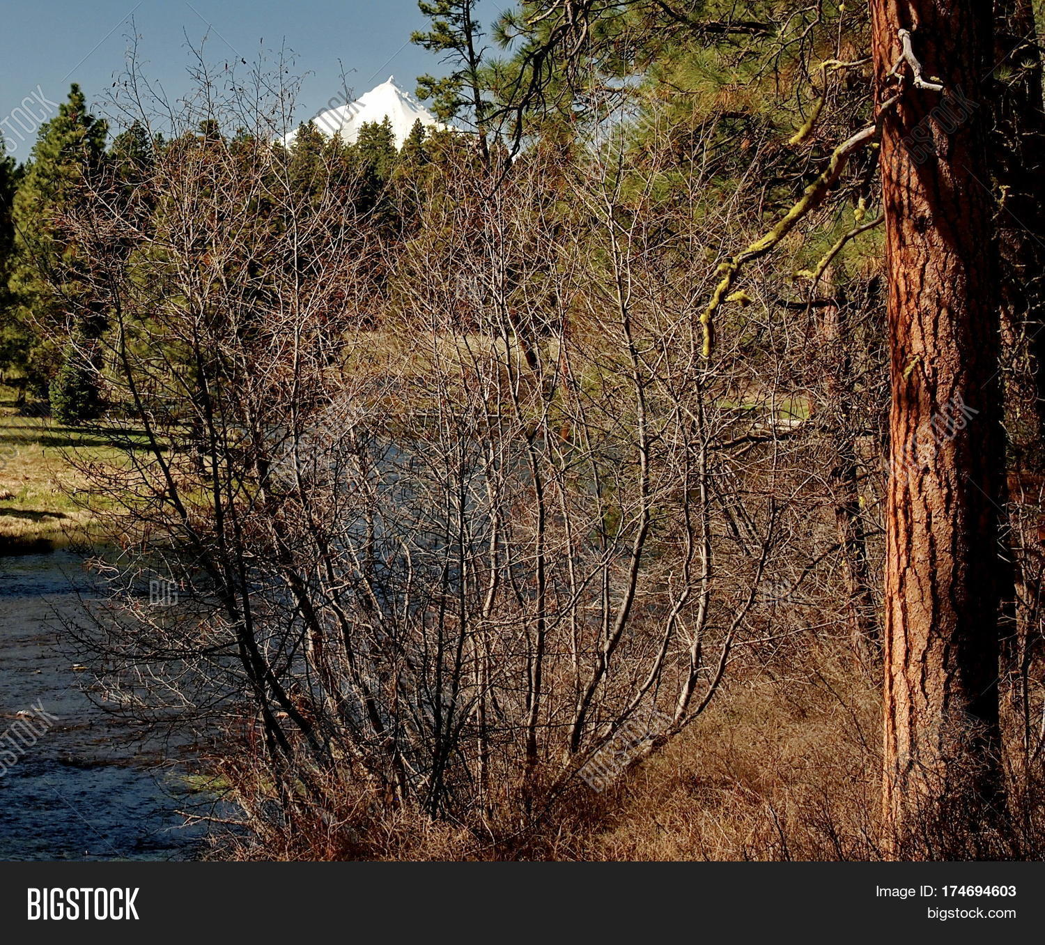 afternoon,america,april,authentic,beautiful,blue,branches,brown,bushes,cascade,color,county,environment,evergreen,forest,geology,grasses,green,grey,jefferson,landscape,mountains,nature,northwest,outdoor,pacific,photograph,pretty,scenic,sky,snow,sunny,terrain,usa,water,white,wild,woods