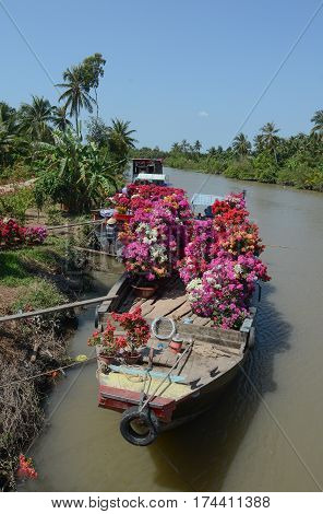 Cargo boats carry flowers in Mekong Delta Vietnam. The Mekong Delta is by far Vietnam most productive region in agriculture. stock photo