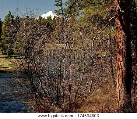 The head waters of the Metolius River in Central Oregon with Mt. Jefferson in the background and ponderosa pine trees on the banks in the spring. stock photo