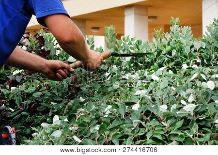 Hands with garden shears doing maintenance work, pruning branch and leaves in garden. stock photo