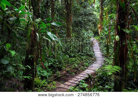 rain forest trail in the Amazon rainforest of Colombia. A wooden path through the tropical jungle. stock photo