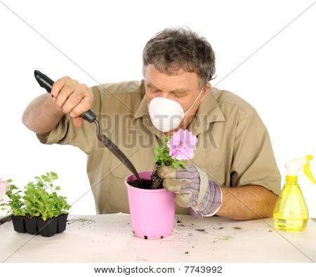 Middle aged nurseryman plants flower in potting soil with protective mask. stock photo