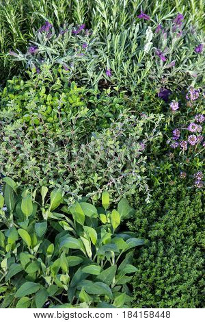 Many Herbs In A Garden Herb Bed.-Lg Fridge Magnet Skin (size 36x65)