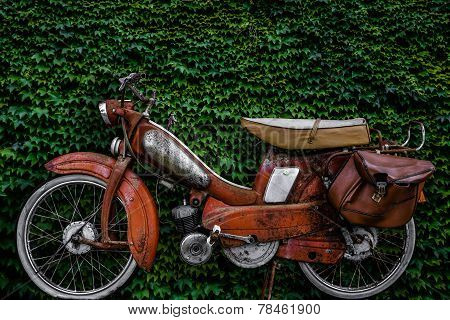 Vintage 60s French Moped Or Scooter With Pannier Bag And Flat Tyre Or Scooter Against An Ivy Background stock photo