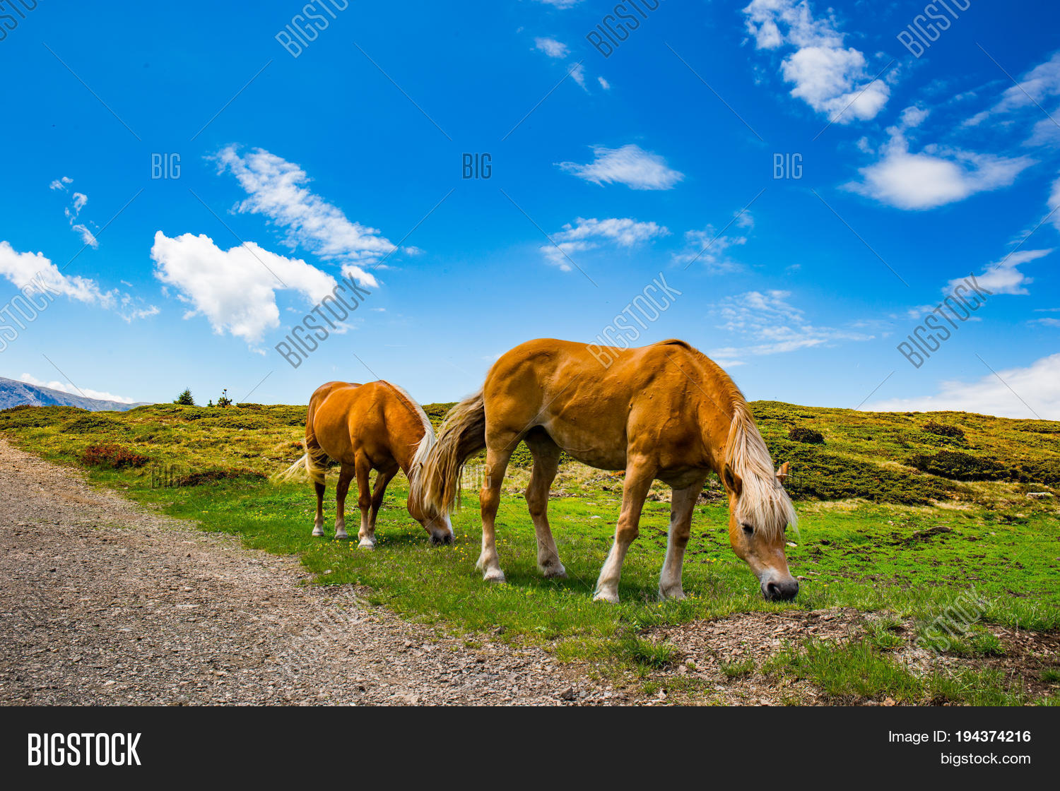 some beautiful wild horses with a mountain scenery in the background
