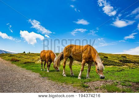some beautiful wild horses with a mountain scenery in the background stock photo