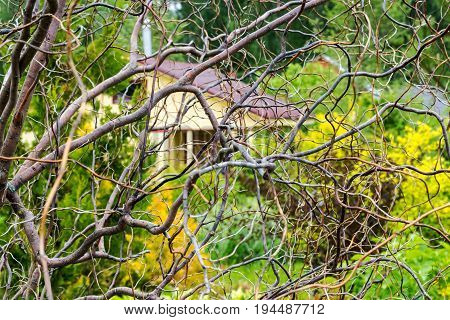 A small house of scanty branches of dried wood bright spots of yellow green a background pattern stock photo