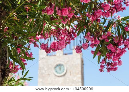 travel to Sicily Italy - pink flowers of oleander and clock tower (Torre dell Orologio) on background at Piazza IX Aprile in Taormina city in summer day stock photo
