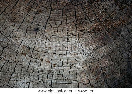 Old pine tree texture stock photo