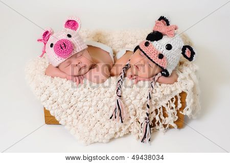 Sleeping fraternal twin newborn baby girls wearing crocheted pig and cow hats. stock photo