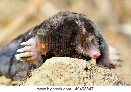mole outdoor stock photo