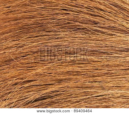 Background from a new home sorgo broom stock photo