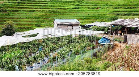 terraced green rice fields in Ma Tra village, Sa Pa, Vietnam stock photo