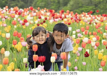 Japanese brother and sister and tulip field (9 years old boy and 4 years old girl) stock photo