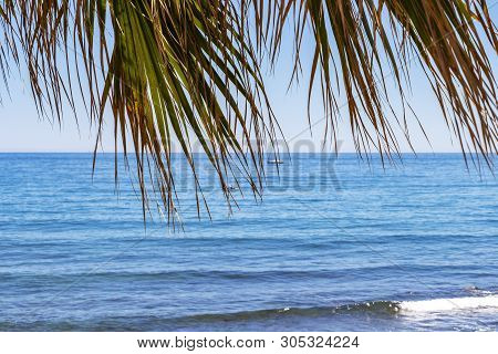 The blurred Mediterranean Sea behind fan palm leaves at a Costa del Sol beach in Marbella, Province of Malaga, Andalusia, Spain stock photo