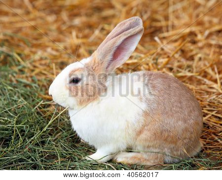 rabbit on grass stock photo