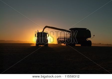 a combine dumps soybeans into a semi tractor-trailer at sundown stock photo