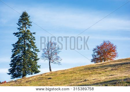 three trees on the hill. different plants in several conditions at once. spruce, leafless and in red foliage. blue sky on the background. unhealthy relationships concept stock photo