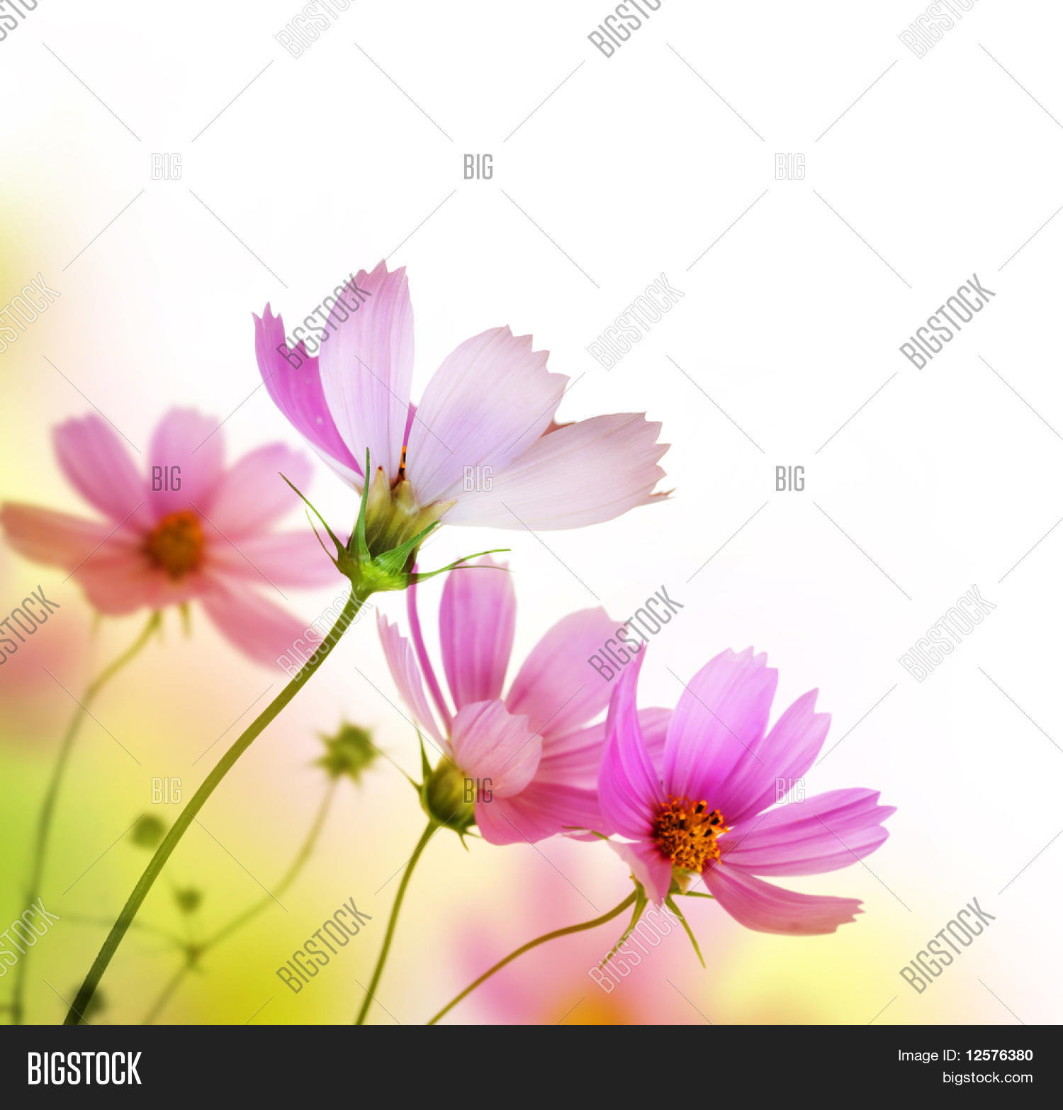 Beautiful Floral Borderflower Design Photo Stock