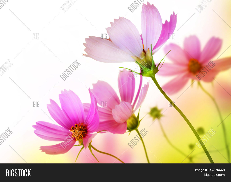 beautiful flowers borderfloral design photo stock abstract izmirmasajfo